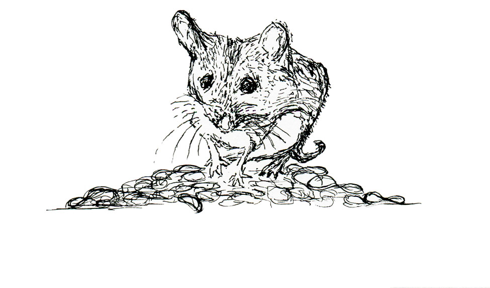 Shrew mouse on rubberbands